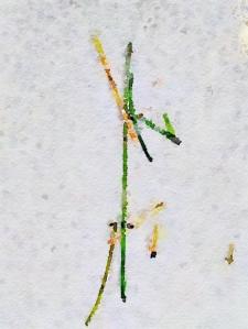 rune 1