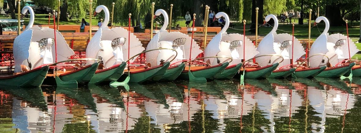 Swan Boats, Boston Public Garden
