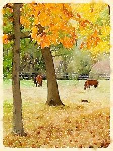 Foal Foliage