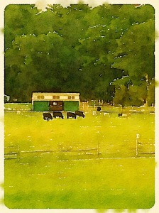 Essex Farm 3