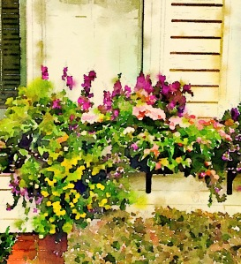 Windowbox, Newburyport