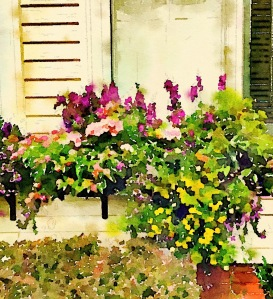 Windowbox, Newburyport 2